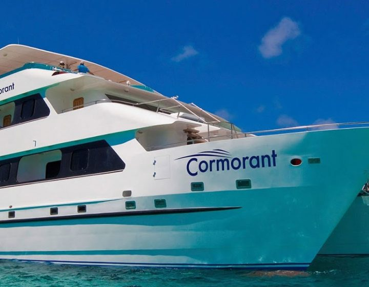 galapagos-cruises-CORMORANT2