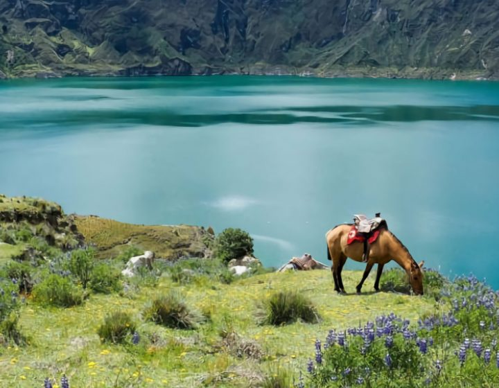 tours-packages-natonal-park-cotopaxi