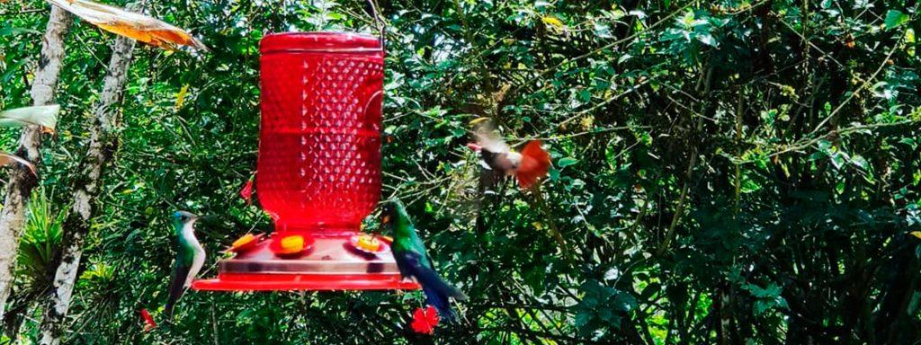 colibries-alambi-quito-ecuador-tours