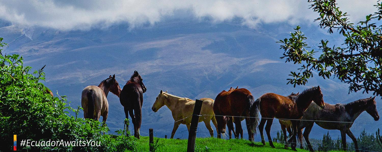 news-tourism-ecuador-2020